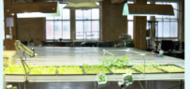 185 – UrbanPonics